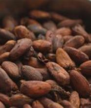 Roasted cacao