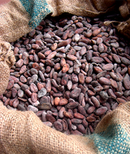 Fresh cacao